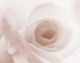 ギターで「君は薔薇より美しい」~布施明さんの歌唱力は高い!